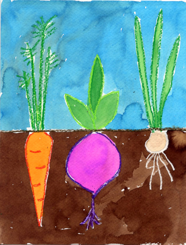 drawing delectable vegetables