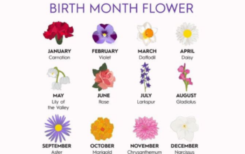 flowers according to months